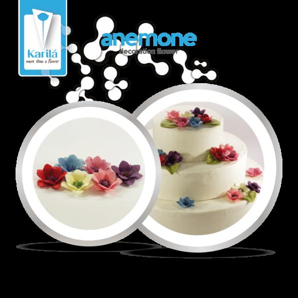 anemone_4