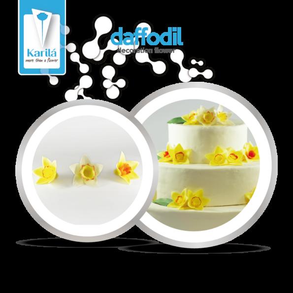 daffodil_4